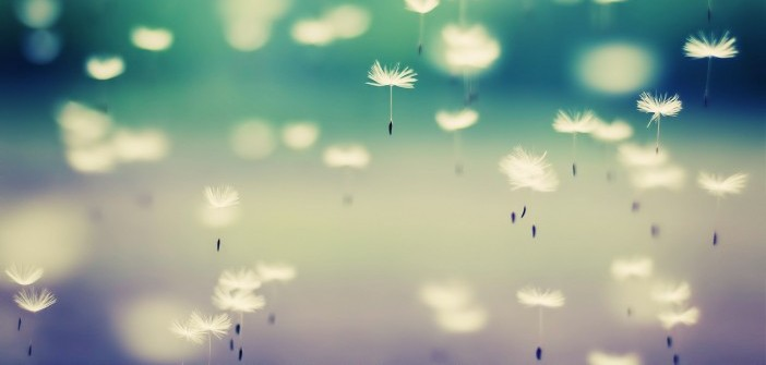 beautiful-dandelion-wallpaper-e1444115060623